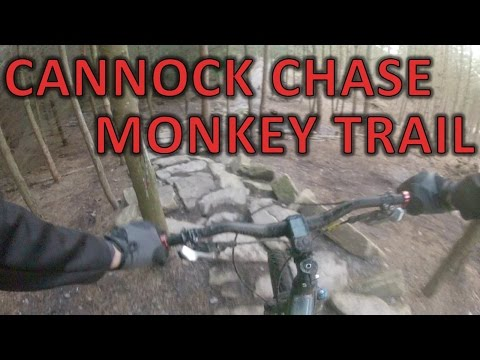 Cannock Chase Monkey Trail