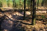 Cannock Chase - Trail sections reopened!