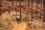 New Freeride Mountain Bike Area Planned For Swinley Forest