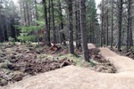 New mountain bike trails for Glenlivet Estate