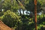 Fenasosa Bike Park Pictures
