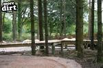 Haldon Forest Skills Area & Pump Track Pictures