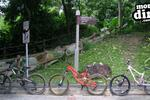 Bukit Timah Trail Pictures