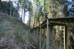 Black Trail - Coed Llandegla Forest Pictures
