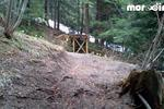Borovets Mountain Bike Park Pictures