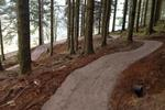 Altura Trail - Whinlatter Forest Pictures
