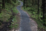 Lonesome Pine Trail - Kielder Forest Pictures