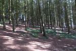 Cofton Woods Pictures