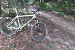 Bedgebury Forest Mountain Bike Trails Pictures