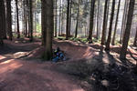 Forest of Dean Mountain Bike Trails Pictures