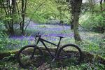 The Wrekin & Ercall Trails Pictures