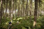 Sherwood Pines Mountain Bike Centre Pictures