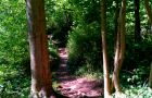 Scar Tree Mountain Bike Trail - Wakerley Great Wood