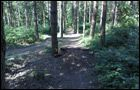 Bourne Woods Trails -