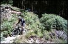 Coed Trallwm - Red Trail -