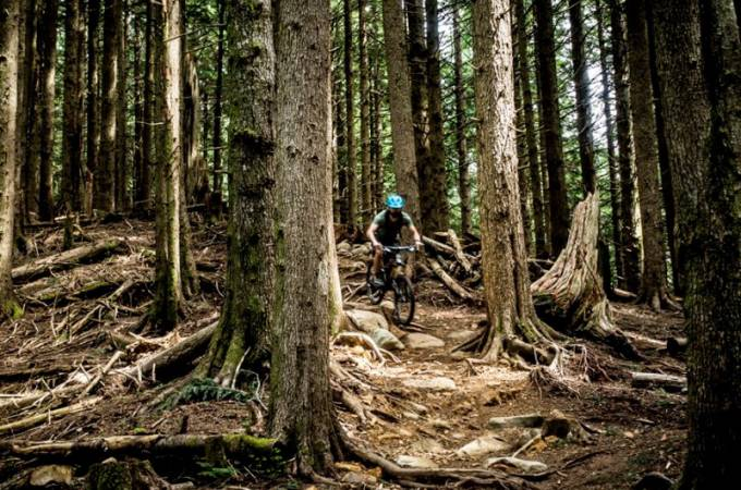 Tiger Mountain Bike Trails - Washington